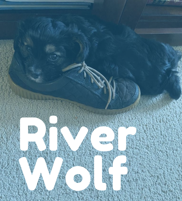 River Wolf (1)