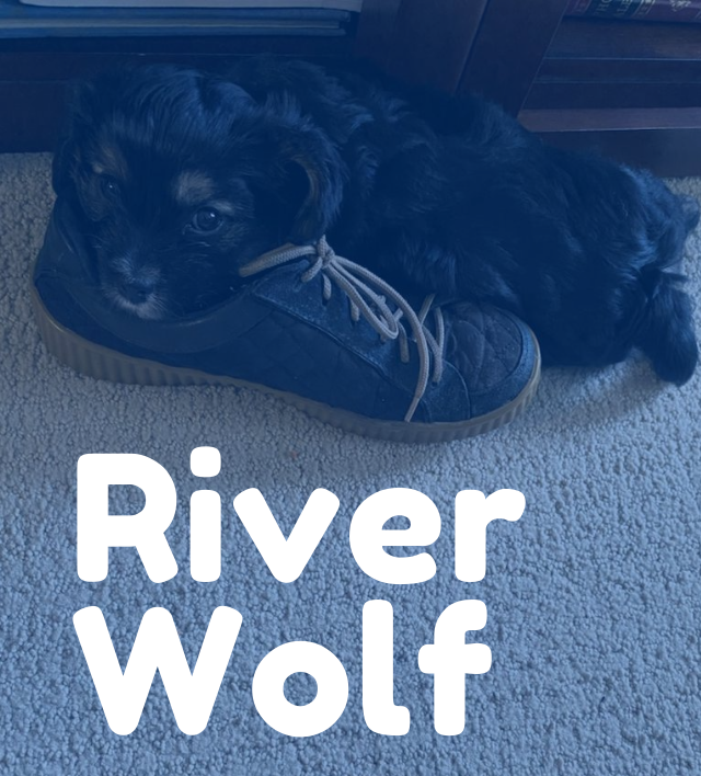 River Wolf (2)